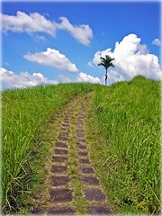 Campuhan Ridge Path | Ubud | Bali (I Prahin | www.southeastasia-images.com) Tags: sky bali nature beautiful beauty clouds indonesia island interesting southeastasia paradise peace path traditional central best palm ridge explore tropical ubud 61 stonepath alangalang coth campuan explored pathtoheaven centralbali wosbarat platinumphoto campuhan platinumsuperstar dragondaggeraward wostimur pathtotheclouds 289b