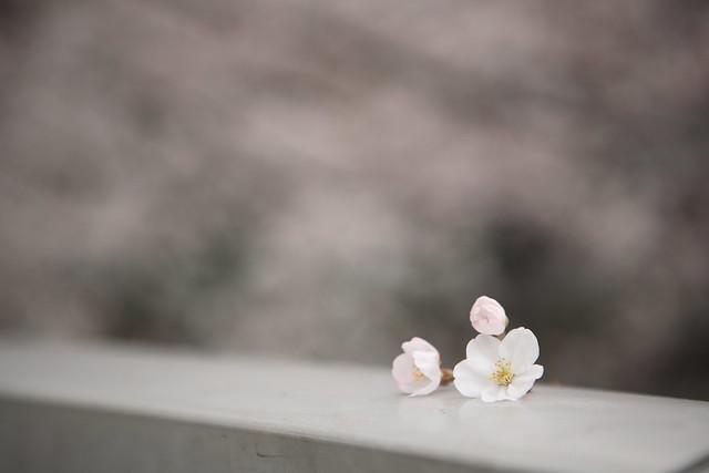 不意に落ちた花房
