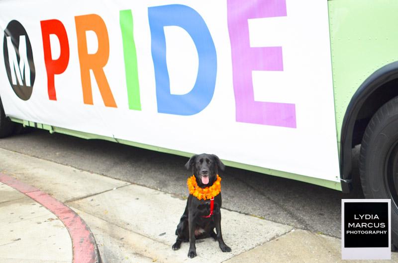 pride2011-4