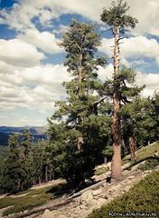 Trees (jukkarothlauronen) Tags: california usa unitedstates sequoianationalpark