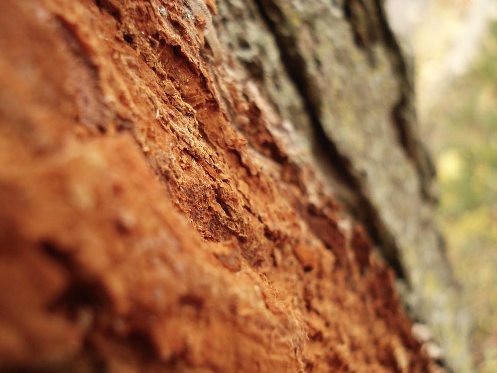 macro tree bark...