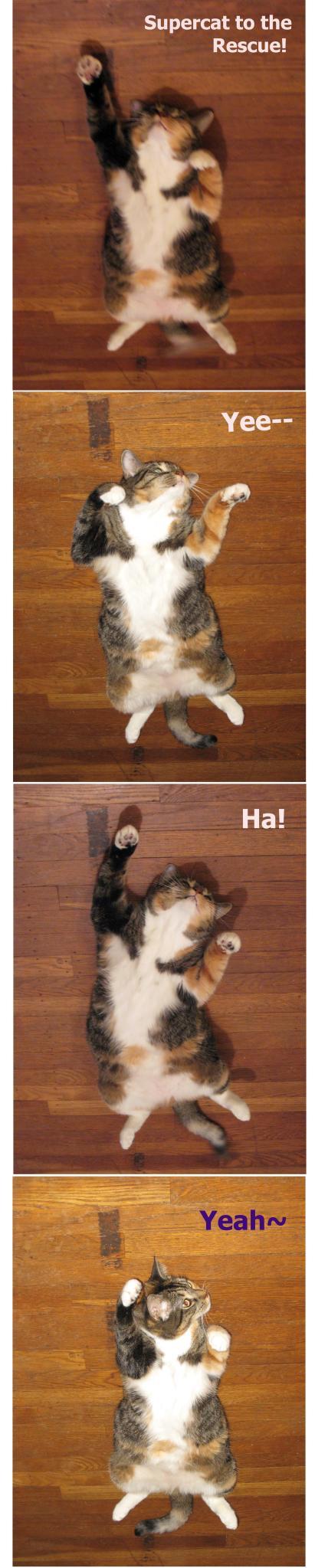超猫Kiwi - 艾小柯 - 流浪者的乡愁