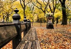 Park Bench (floralgal) Tags: newyorkcity autumn newyork fall landscape centralpark manhattan fallingleaves centralparkbench colorfulleaves colorfultrees centralparkinautumn