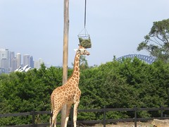 Taronga Zoo 019