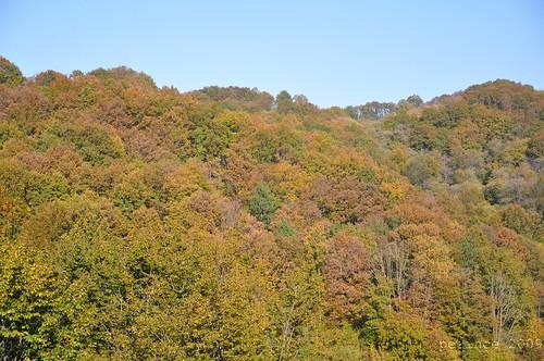 Ağva Orman Yolu