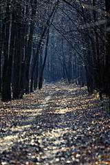 i took a walk........... (mrocki1) Tags: autumn fall nature canon natural scenic trails trail dreamlike minesota naturesfinest freenature mnvalley thebestofnature exploredbeauty
