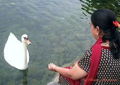 It's Me and my Namesake!! (Sunciti _ Sundaram's Images + Messages) Tags: bird switzerland swan best estrellas 1001nights discovery dazzling blueribbonwinner otw 10faves 5photosaday founa abigfave enstantane concordian anawesomeshot agradephoto flickraward flickerdiamond diamondclassphotgrapher eperke brillianteyejewel concordians awesomescenery brilliantphotography elitephotgraphy artofimages greatshotss capturethefinest mawesomescenery veryimportantphotos artofatmosphere scwanenplatz