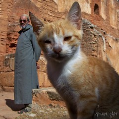 Cat ! - Morocco (Florent Gast) Tags: orange cat morroco rabat oudaya