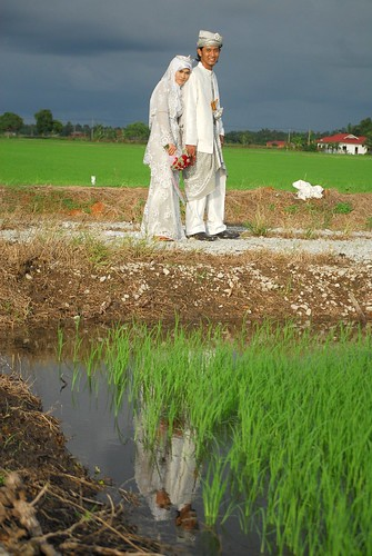 Ori - reflection by the padi field