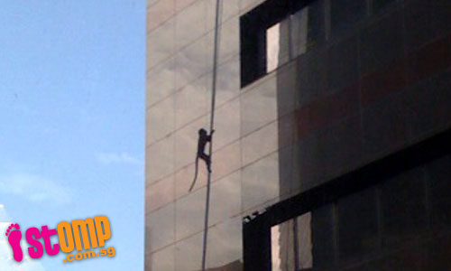 Monkey goes to CBD, monkey climbs building...then monkey gets stuck