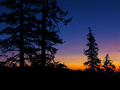 forest of color (onefunkyworld) Tags: trees sunset colors forest dusk alemdagqualityonlyclub