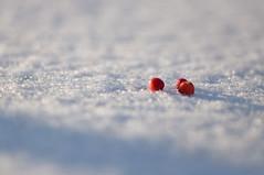 frosty the snow reds. (youngdoo) Tags: winter snow afternoon walk sunday korea neighborhood siji