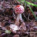 mmh... good mushroom