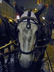 Vienna: cavalli e carrozze (Babj) Tags: vienna wien horse austria coach gig carrozza cavalli cavallo calesse