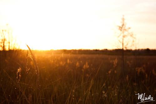 sunset nye 1