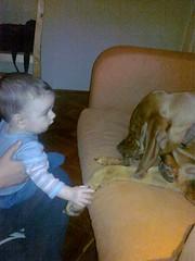 20100113139 (botond11) Tags: baby vizsla handshake