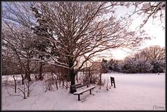 Snow 21 (Miaowlicious) Tags: trees winter white snow bench nikon wintertrees winterlandscape sigma1020 nikond300 maidenheadgolfcourse