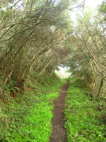 Trail width Photo