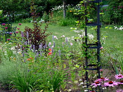 P1020696 (lovesdahlias 1) Tags: summer plants gardens massachusetts newengland favoritegarden bordergardens