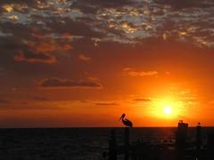 Good Morning Mr. Pelican! (zoniedude1) Tags: ocean morning travel sky sun beach nature beautiful silhouette clouds sunrise mexico dawn coast yucatan playa pelican atlantic adventure explore amanecer exotic bonita tropical caribbean rays exploration mayanriviera marcaribe quintanaroo puertomorelos buenosdias salidadelsol blueribbonwinner anawesomeshot naturessilhouette canonpowershota720is zoniedude1 ¡amoméxico ¡méxicohermoso yucatan2010 ¡srpelicandelabuenamañana plma2010