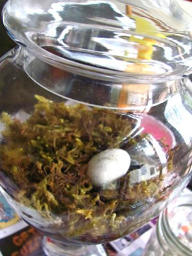 Egg in moss