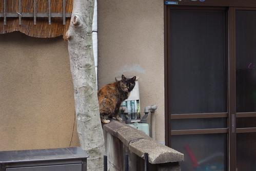 Today's Cat@2010-03-02