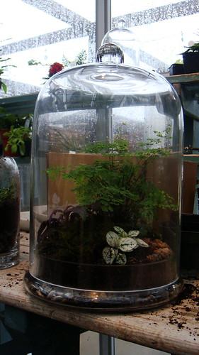 terrain plants container terrarium