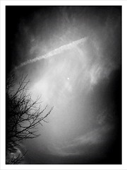 Bring on the night. (JAMES ANTHONY CAMPBELL) Tags: moon crossprocess branches silverspring camerabag iphoneography