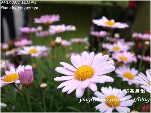 嘉義中埔_綠盈農場20110417_R0019057