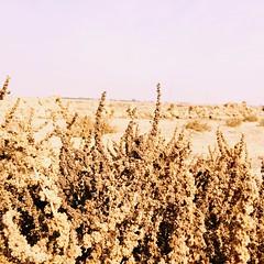 #landscape#zainabsam #photographier (zainabsam) Tags: landscape zainabsam photographier