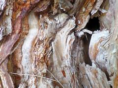 Patterned tree trunk (jo.elphick) Tags: dalmeny nsw australia wood grain woodgrain swirly