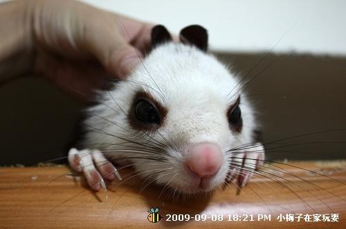 李梅子裝小白兔