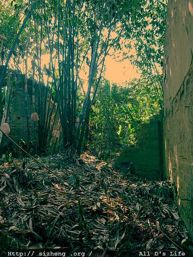 屋内的竹子