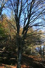 IMG_5931 (creggane_ireland) Tags: cowicklow djoucewoodandglendalough