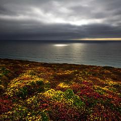 Watching The Weather (jasontheaker) Tags: uk flowers sea england cliff storm cornwall path heather newquay stormy atlantic coastal card greetings jasontheaker bedruthansteps watergatebay landscapephotography