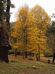 Otoo 2 (Marin2009) Tags: naturaleza nature olympus galicia galiza e300 olympuse300 kdd pontevedra mondariz marin2009 sldmondariz2009