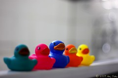 The odd one out! (onesuger) Tags: pink blue orange green water yellow 50mm bath bokeh ducks yellowduck niftyfifty blueduck orangeduck greenduck pinkduck bathducks