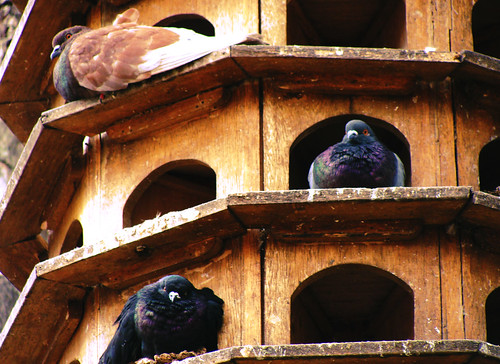 conjunto residencial para aves