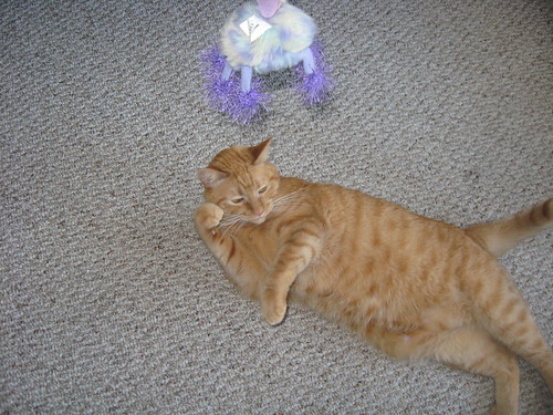 Punkin likes playing with his purple toy.