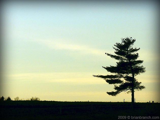 P1060108_tree