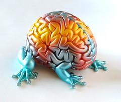 croisement entre un cerveau et une grenouille