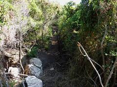 Le sentier littoral au S de Capu di Fenu : le résultat du démaquisage