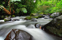 Curug Macan (syukaery) Tags: longexposure trees green nature water leaves forest river indonesia landscape waterfall nationalpark flora nikon stream angle wide tokina jungle plantation lush westjava sukabumi slowspeed halimun macan salak d80 curug