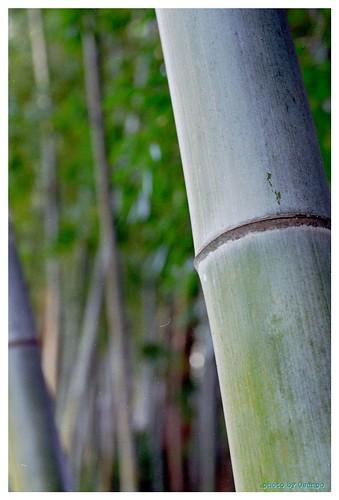 Bamboo 100114 #02
