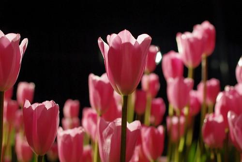100116 新春☆春を先取りツアー17