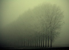 emersioni (mat56.) Tags: winter ice nature misty fog alberi landscape natura camp