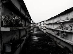 haunting peace. (dfactory) Tags: brazil blackandwhite bw cemetery riodejaneiro dark blackwhite pb cemitério brancoepreto itaboraí notreallybw verylowsaturation calmdownacemeteryisnotsoawesome ifyoudontanygoodcommentshutthefup