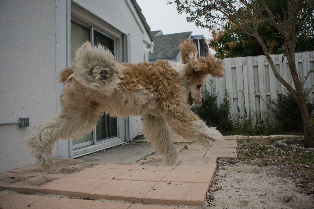 Hi Reddit. This is my dog, she levitates.