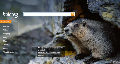 Bing Groundhog Day 2010