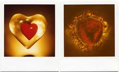 (softlad - resting between engagements) Tags: polaroid sx70 diptych heart valentine burn 600 sonar expired heartburn expiredfilm polaroidsx70